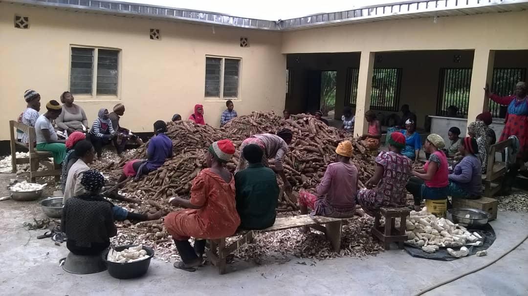 Local Bini Women Hand Peeling Cassava Tuber
